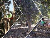 """""""الزراعة"""" تحدد 9 نصائح لمكافحة الآفات بأشجار المانجو.. اقرا التفاصيل"""
