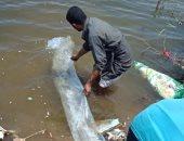 محافظ القليوبية ينفى نفوق الأسماك بمشروع الاستزراع السمكى ببحيرة عرب العليقات