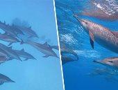"""صور.. """"شعاب العرق والفانوس"""".. جنة محمية الجزر الشمالية بالبحر الأحمر.. تحتوى على بيوت أسراب الدلافين وتبلغ عمر شعابها المرجانية ملايين السنين.. محميات البحر الأحمر وضعت شروطاً لزيارتها.. و10 دولار رسوم الزيارة"""