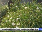 """فيديو.. """"سكاى نيوز"""": زراعة الياسمين تنعش قرية محمد صلاح"""