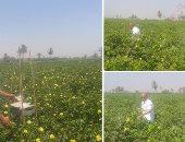 الزراعة: زيادة مساحات زرع القطن لـ336ألف فدان وارتفاع الإنتاجية لـ8 قناطير