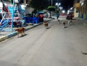 شكوى من انتشار الكلاب الضالة بالقنطرة فى الإسماعيلية