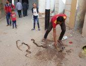 صور..الأفاعى تحاصر قرية منيةسعيد بالبحيرة..والأهالى يشكلون لجانا لمطاردتها