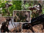الجيش المكسيكى يحرق 6000 متر مربع من مزارع الماريجوانا