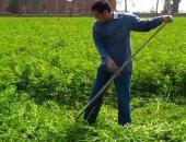 """""""الزراعة"""" توافق على تصدير 15 طن تقاوى برسيم وذرة لدول عربية خلال أسبوع"""