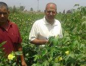 الزراعة تواصل حملات المرور على المحاصيل الصيفية ومتابعة صرف الأسمدة بالمحافظات
