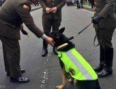 عصابة مخدرات كولومبية تخصص مكافأة 70 ألف دولار لمن يقتل كلبة بوليسية