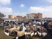 الزراعة: ترقيم 299 ألف رأس ماشية خلال 30 يوما واستمرار حملة التسجيل
