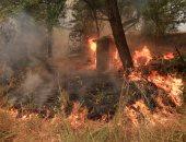 حريق بمنطقة زراعية قريبة من منطقة النجدة بأسوان