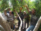 الزراعة: لجان مكثفة لتدقيق إنتاج محصول الرمان بمحافظتى أسيوط والبحيرة