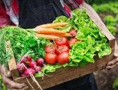 أسعار الخضروات اليوم السبت 19-1-2019 والبطاطس 5.5 بالجملة
