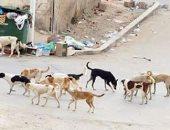 انتشار الكلاب الضالة بدمياط الجديدة.. ومجلس الأمناء يتخذ إجراءات لمواجهتها