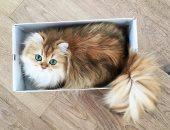 سجن ماليزى 34 شهرا بعد قتل قطة بوضعها فى آلة لتجفيف الملابس
