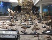فيديو..قرن على إنشاء متحف الحيوان ولم تزده السنوات إلا تألقاً