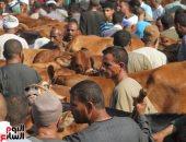 تجار المواشى يستعدون لعيد الأضحى فى أسواق الجيزة