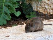 """جرثومة """"بول الحيوانات"""" تثير الرعب فى إسرائيل.. وصحة تل أبيب تحذر من وباء"""