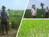 وزير الرى: حظر زراعات الأرز فى غير المناطق المصرح بها وغرامة على المخالفين