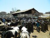 الرقابة على الواردات تستقبل 95 ألف طن لحوم و13 ألف رأس ماشية