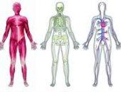 اعرف جسمك.. الجهاز العصبى الباراسمبثاوى ينظم عمل الجسم ويتحكم فى الغدد