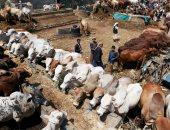 صور.. ازدحام أسواق المواشى فى العاصمة اليمنية صنعاء قبل عيد الأضحى المبارك