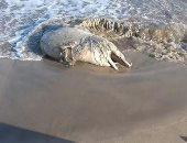 محميات البحر الأحمر: 4 أسباب لوفاة الدلافين والكائنات البحرية