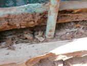 """""""زراعة الأقصر"""" تواجه النمل الأبيض فى 25 منزلاً بقرية الأقالته غربى المحافظة"""