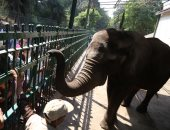 صور.. مدير حديقة الحيوان: 6000 زائر حتى الآن ولم نرصد أى تجاوزات والإقبال ضعيف