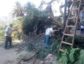 صور.. سقوط شجرة أمام مجمع سينما جلاكسى بمصر القديمة
