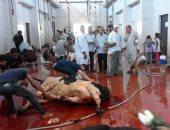 صور .. استكمال ذبح أضاحى الفقراء والحالات الأولى بالرعاية فى الداخلة