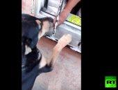 شاهد.. كلب يشترى طعامه من محل أغذية بعد حصوله على النقود من صاحبه