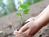 برنامج يتيح للبرتغاليين زراعة الأشجار وتسجيلها بأسمائهم فى مكتب البريد