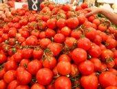 """رسميا.. """"الزراعة"""" تحظر استيراد تقاوى الطماطم 023 بعد ثبوت إصابتها بفيروس"""