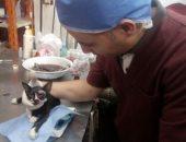 صور.. عملية جراحية لإزالة عين لقط بلدى فى المستشفى البيطرى بدسوق