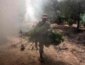 صور.. الجيش المكسيكى يحرق 19 ألف متر مربع من مزارع الماريجوانا