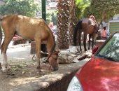 قارئ يشارك بصورة حصانين بميدان الباشا فى المنيل