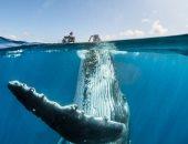 جربت تلعب مع حوت؟.. مستكشفون فى مغامرة بأعماق المحيط الهادى..  صور
