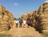 """صور.. """" البيئة بوسط الدلتا """" تدعم الشباب والمزارعين بجمع 895 طن قش ارز باول ايام بدء موسم الحصاد بالغربية"""