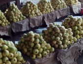 5 نصائح لمزارعى الجوافة لزيادة الإنتاج.. تعرف عليها