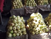 """""""الزراعة"""" تستكمل البرنامج التدريبى لسحب عينات الفاكهة ومحطات تعبئة الموالح"""