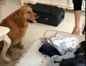 شاهد.. شاب صينى يوثق وفاء كلبه بفيديو مؤثر