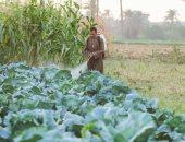 استكمال برنامج مطبقى المبيدات وتأهيل 7000 للقضاء على الرش العشوائى