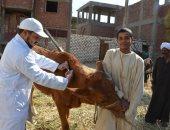 تحصين 208 ألف رأس ماشية ضد مرض الحمى القلاعية والوادى المتصدع بكفر الشيخ