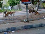 كلب مسعور يعقر 3 اطفال بالغربية