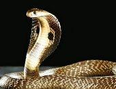 علماء يفشلون فى العثور على متطوعين لإجراء دراسة حول الخوف من الثعابين