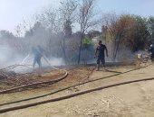 صور.. السيطرة على حريق بأشجار مجمع مواقف ملوى بالمنيا
