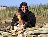 """صورة اليوم.. الذرة فى يد الفقير """"فرحة"""""""