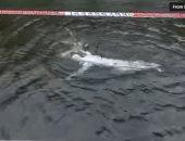 شاهد.. إنسان آلى قادر على السباحة باليابان