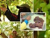 منتجات مصر الزراعية تنافس 130 دولة بمعرض فروت لوجستيكا فى برلين