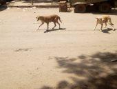 انتشار الكلاب الضالة خلف نادى المقاولون العرب.. والأهالى يستغيثون