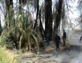 الدفاع المدنى بالوادى الجديد يسيطر على حريق فى مزرعة بقرية الجديدة